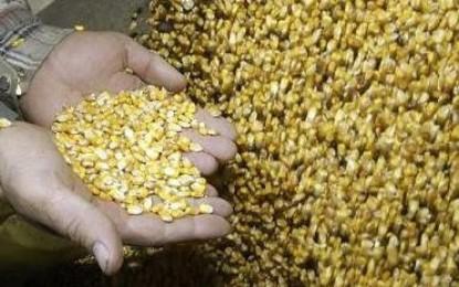 Alimentos: silencioso asesinato en masa en países en desarrollo