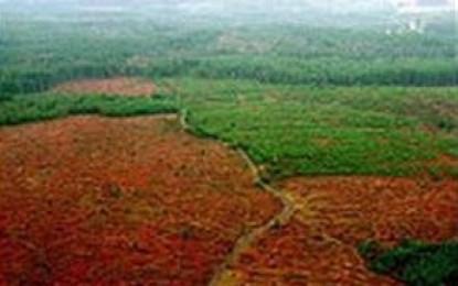 Bosques, agrocombustibles y las políticas del hambre