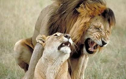 Mendoza en cifras: leones, ansiolíticos, chorros, etc.
