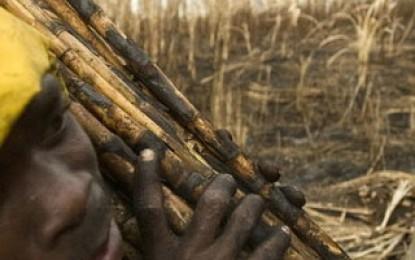 """Una novela denuncia la moderna """"esclavitud"""" de los campos de caña de azúcar"""