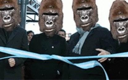 Gorilas enredrados no se extinguen