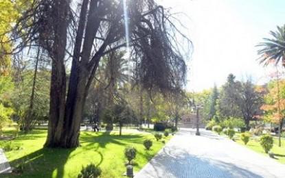 San Rafael: nueva voz, por tema de los árboles de la plaza San Martín