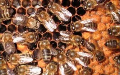 Se constituyó el consorcio de exportación de pequeños apicultores de Cuyo