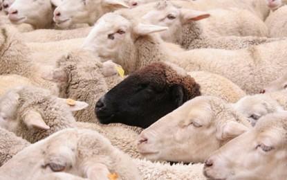 Escolaridad estatal y «aparta de ovejas» (o cómo la D.G.E. ningunea la laicidad)