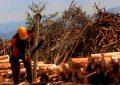 La papelera que devora Colombia