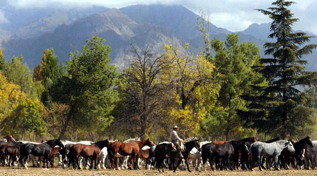 Macri remata tierras en el Valle de Uco