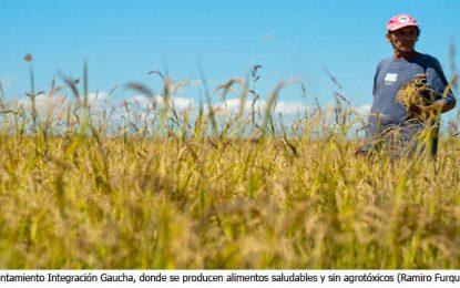 Agricultura familiar: políticas públicas y la alimentación saludable en las escuelas