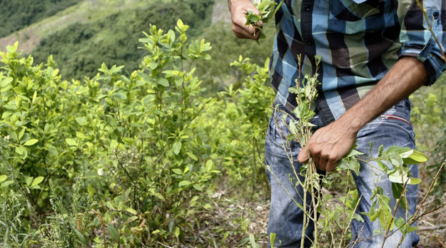 La agonía del campesino cocalero en Colombia