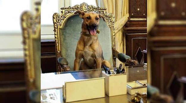 En el nombre del perro: notas para una psicología del cambio