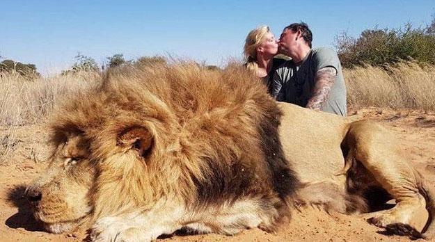 """""""Asesinato"""" de un león en África causa repudio internacional"""