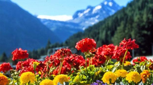 Primavera hermosa… Alegre primavera!!! En el mes más cruel…