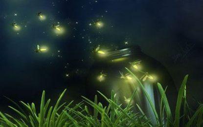 Virus: luciérnagas contra coronas