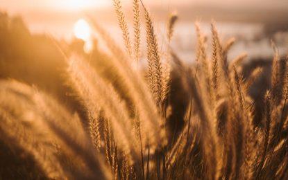 Panes y sopaipillas para combatir el trigo HB4 aprobado en Argentina y prohibido en Europa